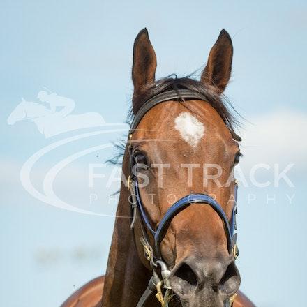 Race 7, I Love It_21-02-16, Launceston, Sharon Chapman_0224