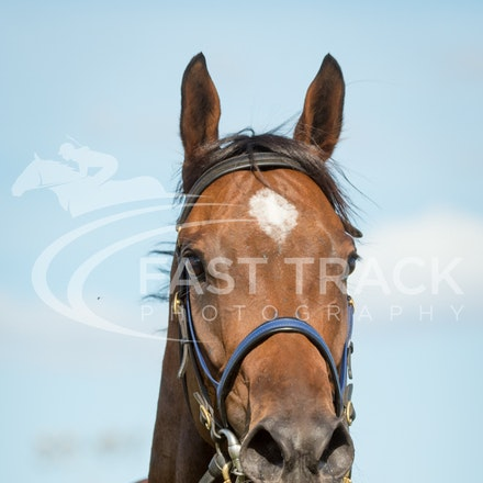 Race 7, I Love It_21-02-16, Launceston, Sharon Chapman_0223