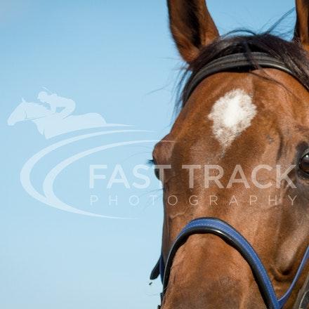 Race 7, I Love It_21-02-16, Launceston, Sharon Chapman_0226