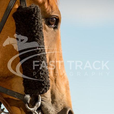 Tas Racing, General_17-02-16, Launceston, Sharon Chapman_080