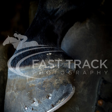 Tas Racing, General, Farrier_17-02-16, Launceston, Sharon Chapman_074