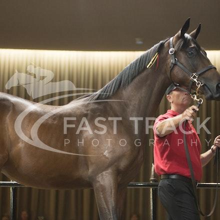 Lot 1, Americain x Fair Choice, Colt, Daisy Hill_28-02-16, Inglis Premier, Melbourne, Sharon Chapman_0089