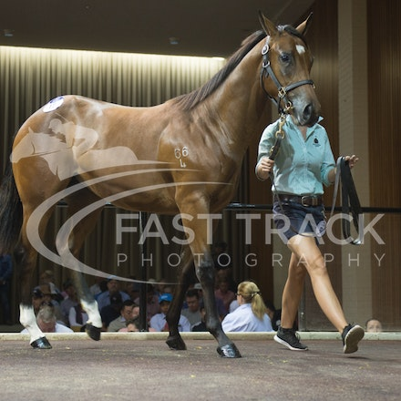 Lot 12, Delago Deluxe x Forever The Chill, Filly, Newhaven_28-02-16, Inglis Premier, Melbourne, Sharon Chapman_0090