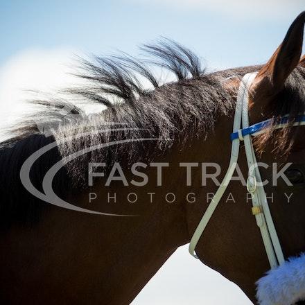 Race 1, Blendwell_19-03-16, Rosehill, Sharon Chapman_0044