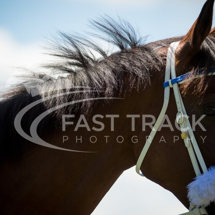 Race 1, Blendwell_19-03-16, Rosehill, Sharon Chapman_0045