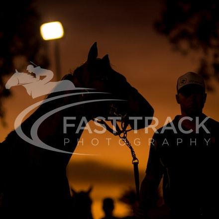MM, General, Parade Ring, Sunset_14-03-16, Adelaide, Sharon Chapman_0057