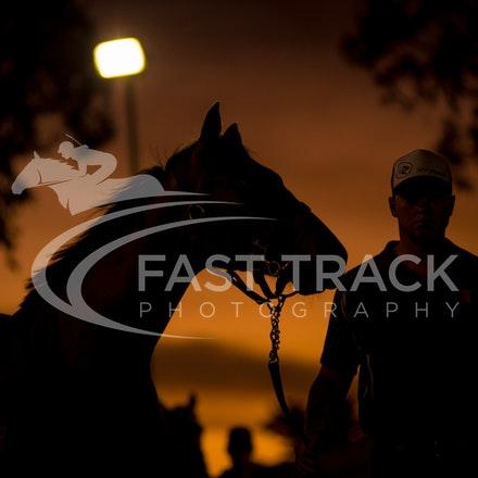 MM, General, Parade Ring, Sunset_14-03-16, Adelaide, Sharon Chapman_0056