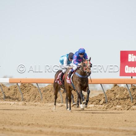 Race 1, Nordic Red, Clayton Gallagher_04-09-16, Birdsville, WIN_551