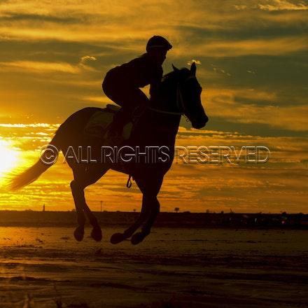 Trackwork, Sunrise, Lupo Nero, Kristie Peoples_03-09-16, Birdsville,_078