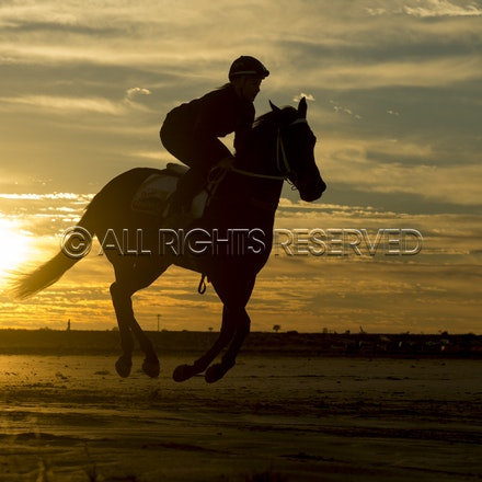 Trackwork, Sunrise, Lupo Nero, Kristie Peoples_03-09-16, Birdsville,_079