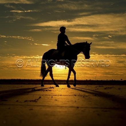 Trackwork, Sunrise, Lupo Nero, Kristie Peoples_03-09-16, Birdsville,_084