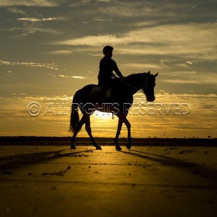 Trackwork, Sunrise, Lupo Nero, Kristie Peoples_03-09-16, Birdsville,_085
