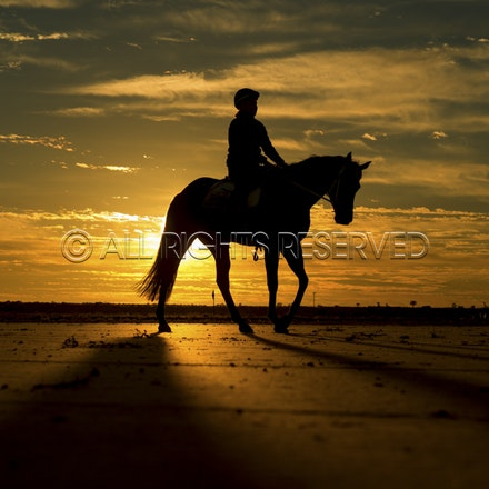 Trackwork, Sunrise, Lupo Nero, Kristie Peoples_03-09-16, Birdsville,_088