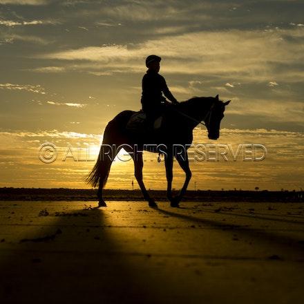 Trackwork, Sunrise, Lupo Nero, Kristie Peoples_03-09-16, Birdsville,_089