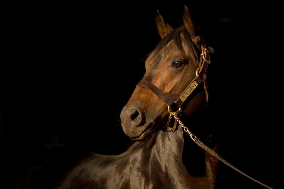 Newgate Stallions, Dissident_12-04-16_0088