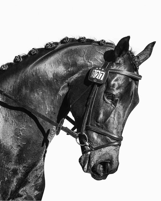 Dressage Gosh Black and White Print