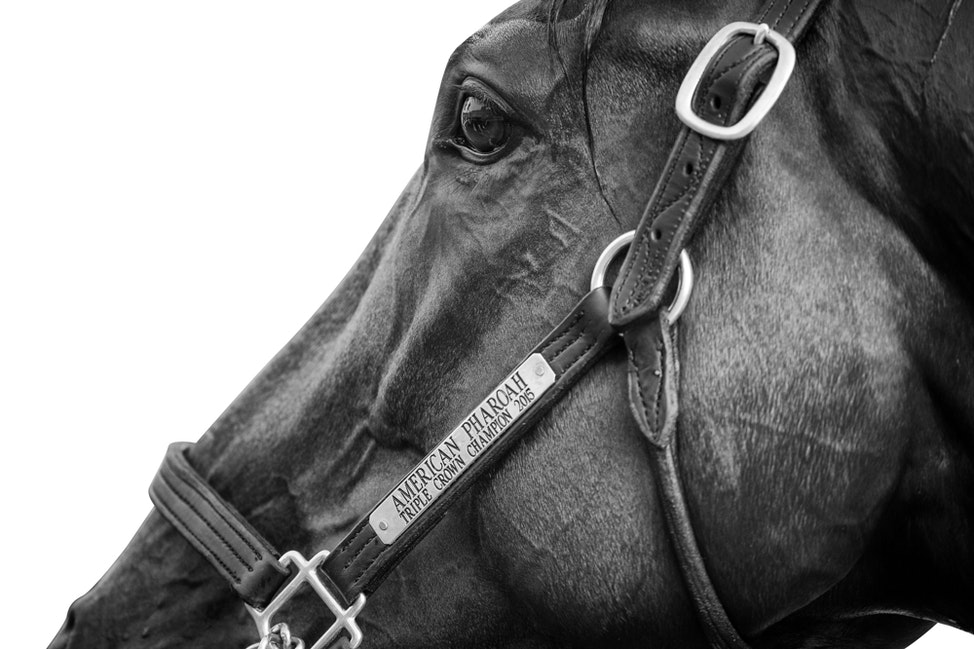 American Pharoah Black and White Print
