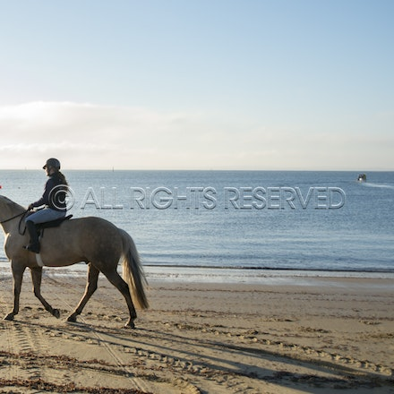 Balnarring Beach, General_17-11-16_068