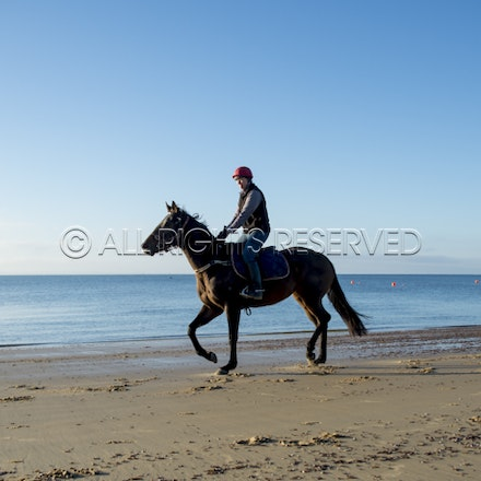 Balnarring Beach, General_17-11-16_071