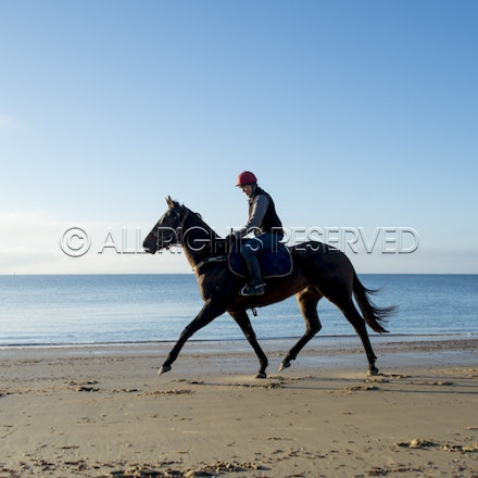 Balnarring Beach, General_17-11-16_073