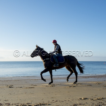 Balnarring Beach, General_17-11-16_072