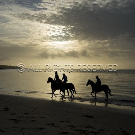 Balnarring Beach, General_18-11-16_057