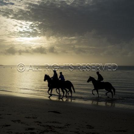 Balnarring Beach, General_18-11-16_055