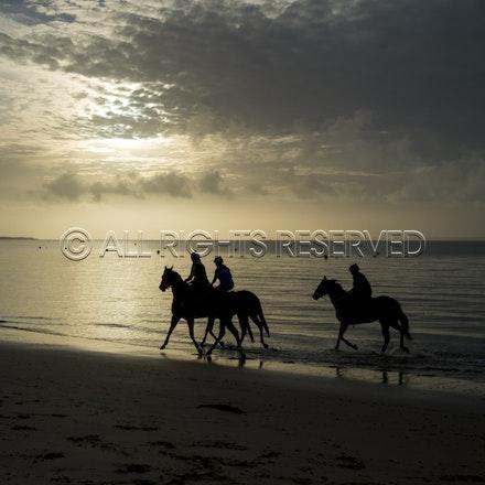 Balnarring Beach, General_18-11-16_056