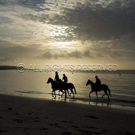 Balnarring Beach, General_18-11-16_058