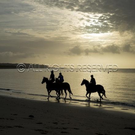 Balnarring Beach, General_18-11-16_060
