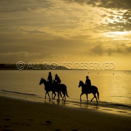 Balnarring Beach, General_18-11-16_061