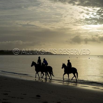 Balnarring Beach, General_18-11-16_062