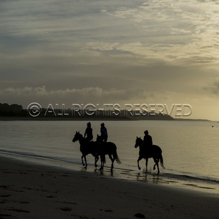 Balnarring Beach, General_18-11-16_064