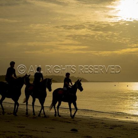 Balnarring Beach, General_18-11-16_069