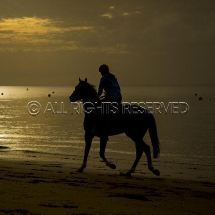 Balnarring Beach, General_18-11-16_070