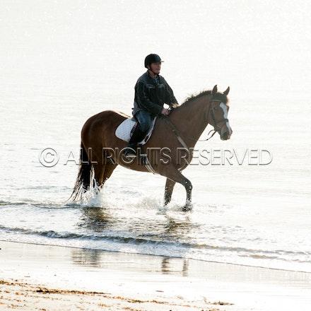 Balnarring Beach, General_29-11-16, Sharon Chapman_0126