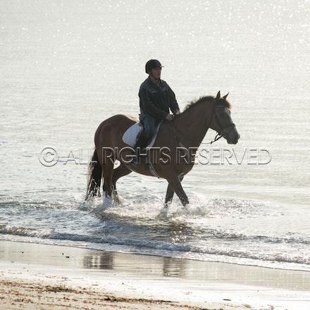 Balnarring Beach, General_29-11-16, Sharon Chapman_0125