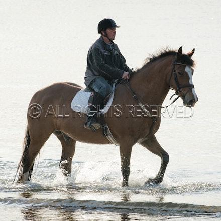 Balnarring Beach, General_29-11-16, Sharon Chapman_0130