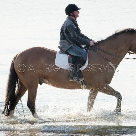 Balnarring Beach, General_29-11-16, Sharon Chapman_0131