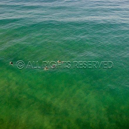 Gunnamatta Surf Beach, Rye_22-01-17, Mark Lee_0005