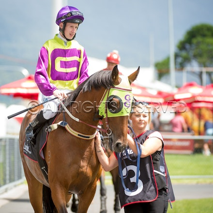 Race 1, Gee Gee Mistachips, Nathan Punch_ 03-02-17, Hobart, Sharon Lee Chapman_0377