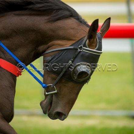 Race 1, Blinkers_05-02-17, Hobart, Sharon Lee Chapman_0057