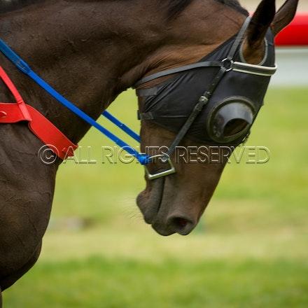 Race 1, Blinkers_05-02-17, Hobart, Sharon Lee Chapman_0058
