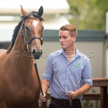 Lot 7, Snitzel x Fashion Police, Filly, Luskin Park_11-01-17, Magic Millions_0031