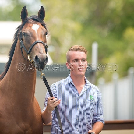 Lot 7, Snitzel x Fashion Police, Filly, Luskin Park_11-01-17, Magic Millions_0035