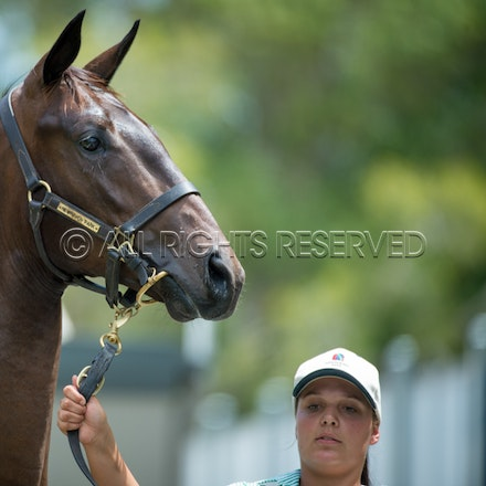 Lot 260, More Than Ready x Mystically, Colt,_12-01-17, Magic Millions_0120