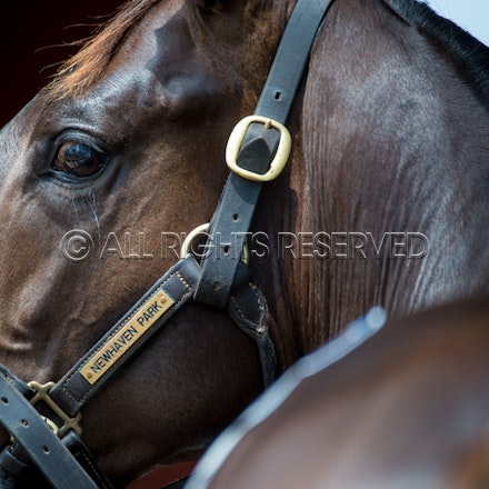 Magic Millions - Day Two - 12 January 2017
