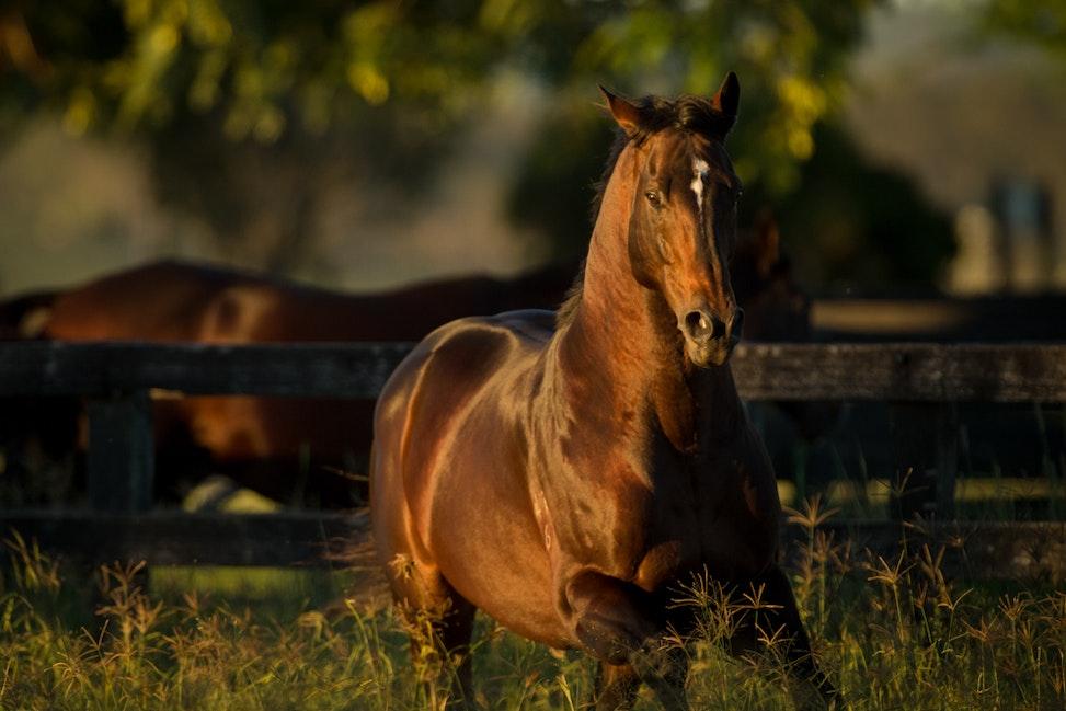 Sun Stud, Love Conquers All, Paddock_11-04-17, QLD, Sharon Lee Chapman_0445