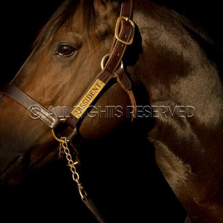 Newgate Stallions, Dissident_12-04-16_0085
