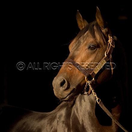 Newgate Stallions, Dissident_12-04-16_0087